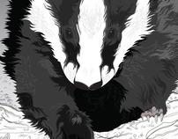 Curious Badger