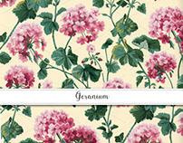 Geranium Textile, Gift Wrap & Invitation Collection