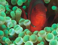 Underwater photos of Bali island.