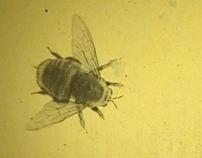 Vanishing Bee