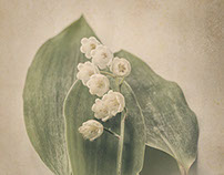 The Scent of Spring - Lily of the Valley