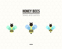 Honey Bees - Data visualization