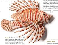Sierra Magazine - paper sculptures