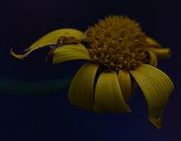 somber flowers