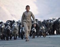 Sheeps Army .