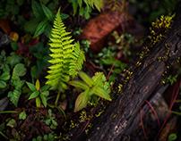Plants·Field