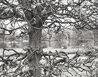 trees mirror