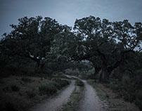 trees of life - Monte Barata