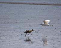 Sea birds of Dorset