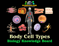 Body Cell Types