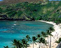 Top Snorkeling Spots in Hawaii