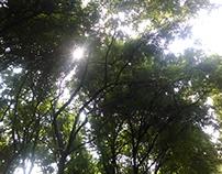 Sun and Shine