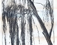 Willow weeping tree Gravure