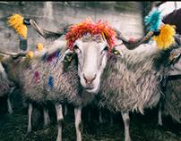 Blessing The Flocks