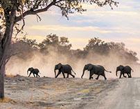 Safari au Botswana & Namibie