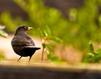 Bird on watch