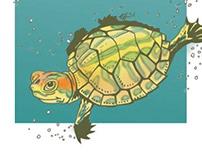 Birthday Turtles!