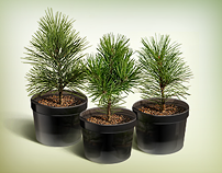 24kedr.ru Online store selling cedar