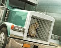 Tráfico de Animais - ViaRondon