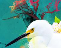 Illustrations 2009 ( Sept - Dec )