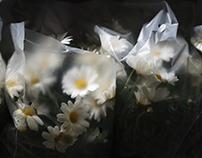 Flowers & Plastic