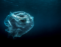 STOP DEVASTATING THE OCEAN. WE ARE ALL GUILTY. YOU TOO.