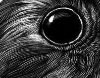 Redbreast - Illustration