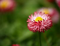 Flower by Girish Vasharambhai Bagadia