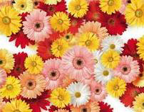 Fan of Flowers