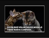Fundación Grupo Modelo Seguridad Vial / GATOS
