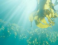 Patagonia submarina - Underwater Patagonia