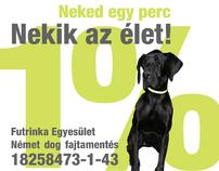 Futrinka association for shelter dogs
