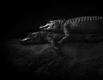 Crocodile Couple.