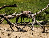 Bosque El Cañoncillo, La Libertad
