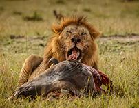 Kenya - Massai Mara