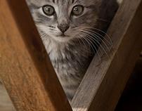 katter - sommer