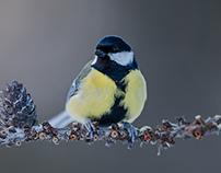 Birds Collection 12