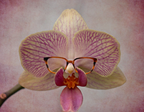 Mr. Orchid