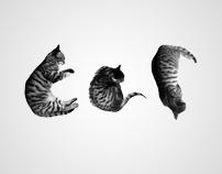 cat-4-cat