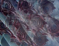 Lomography Color Xplosion 100
