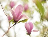 Floral M O M E N T
