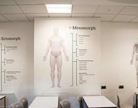 Somatotypes (PE Classroom design)