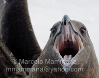 Antártida: picos y colmillos  Antarctica: beaks & fangs