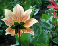 Flowers of 2009