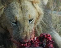 Kenya 2009: Safari