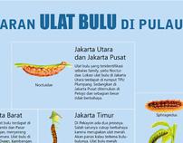 Ulat bulu infographic