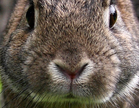 Rabbit / tomatdesign