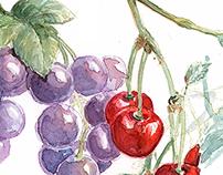 Semeli Wine Watercolors