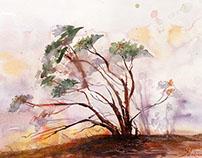 Watercolors III