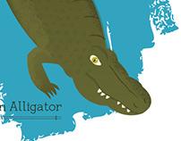 Alligator mississippiensis -- American Alligator